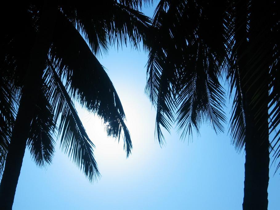 Palmen im Kunstlicht (1)