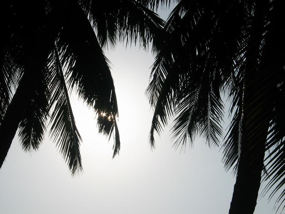 Palmen im Kunstlicht (2)