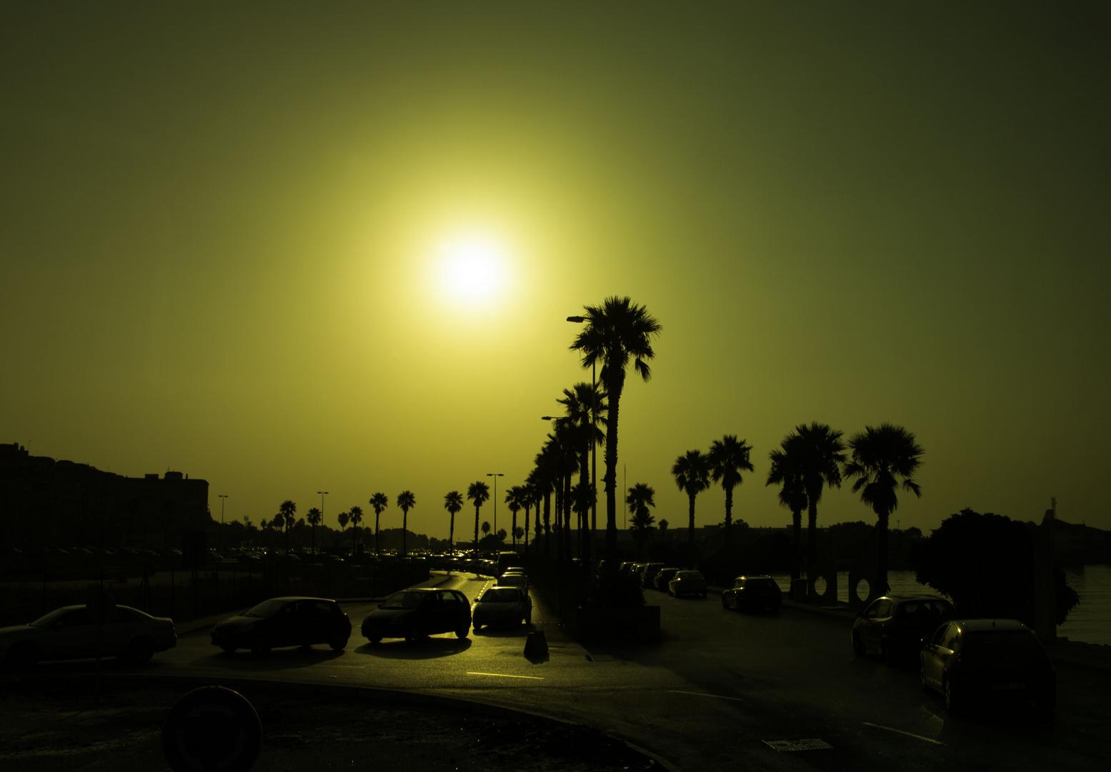 Palmen im Morgenlicht
