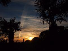 Palmen im Sonnenuntergang