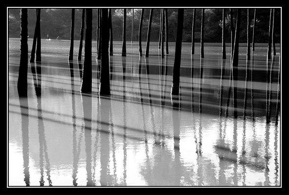 Palmen im Wasser (Myanmar)