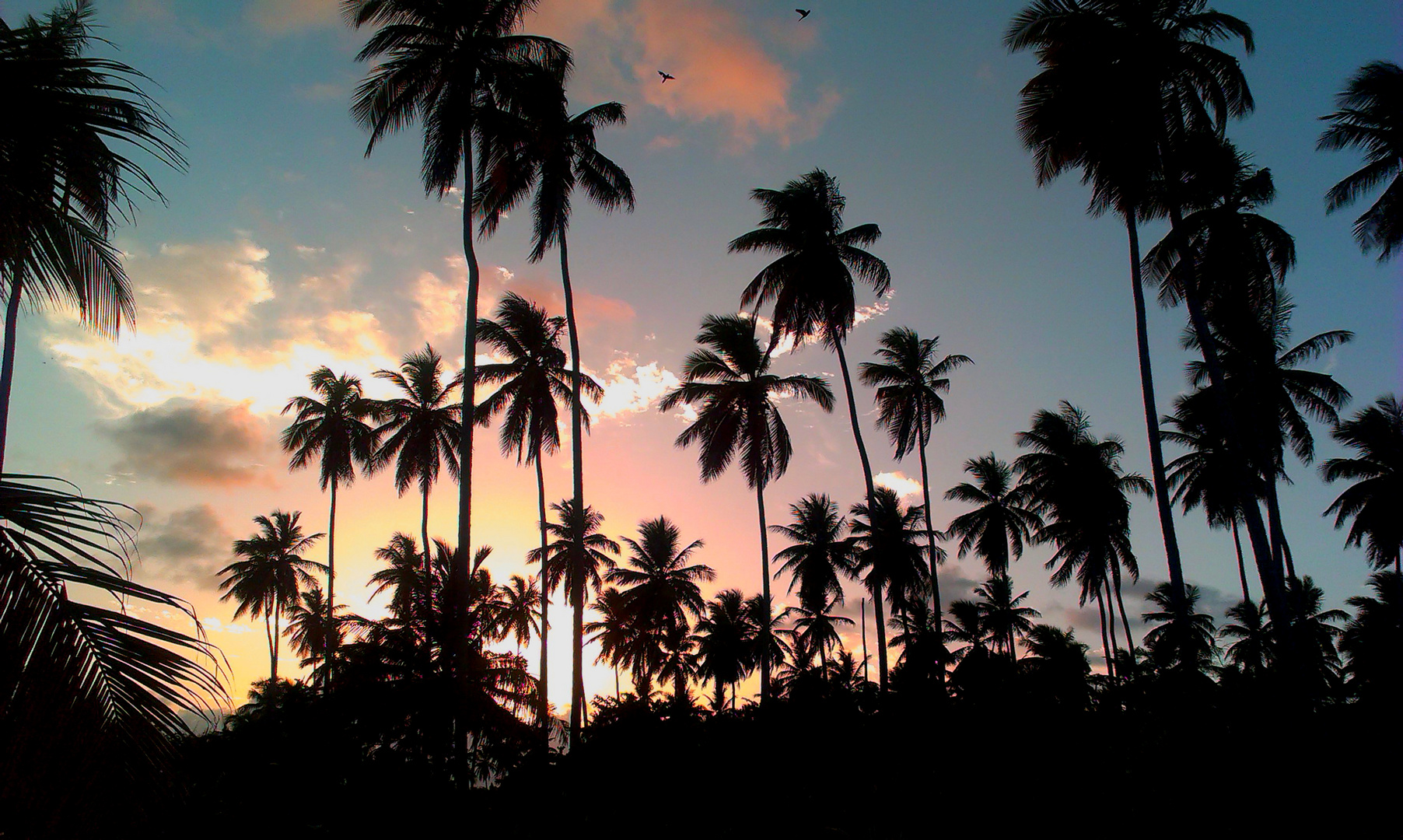 Palmen in Abenddämmerung