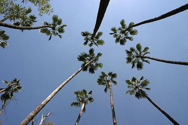 Palmen in Malaga