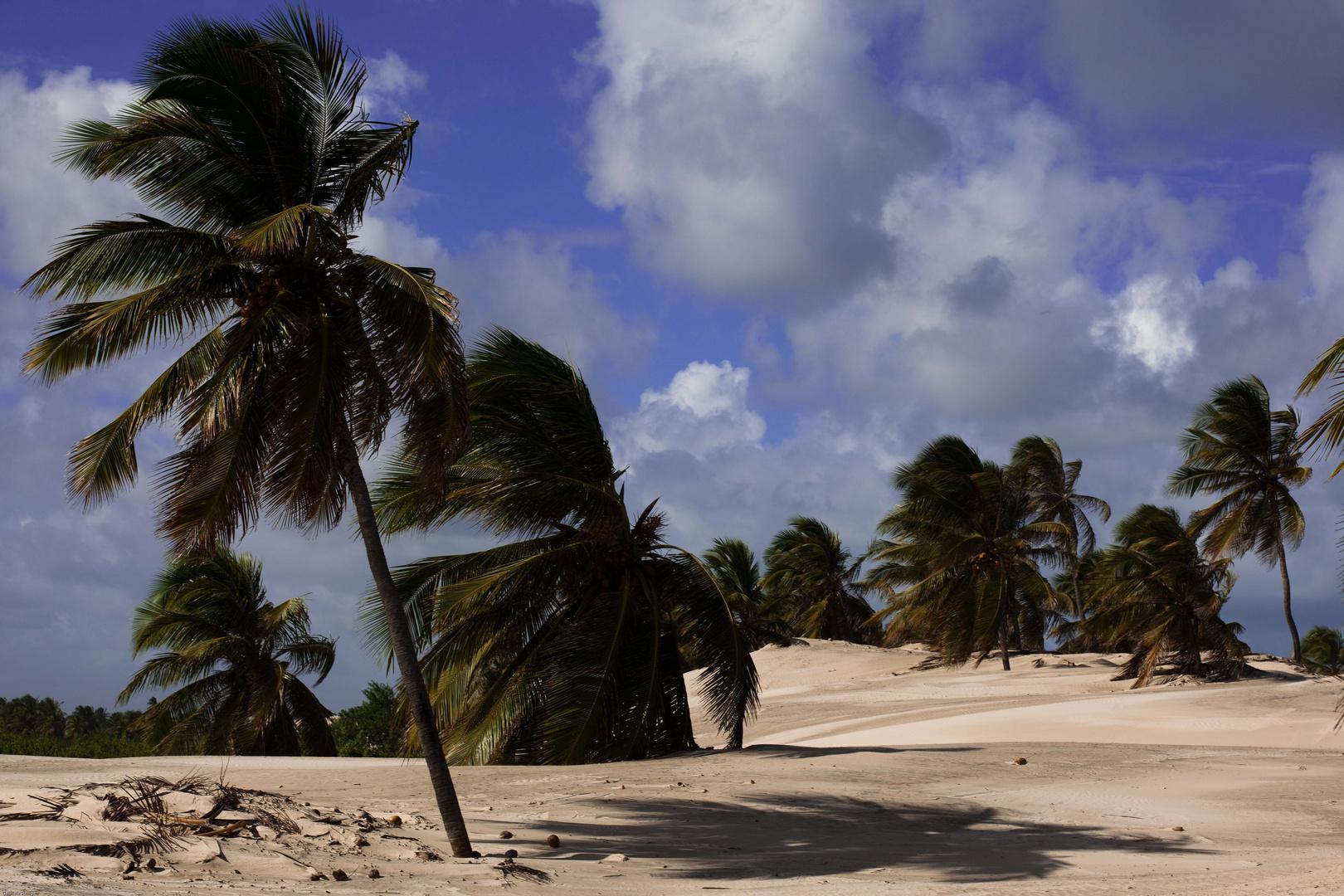 Palmen in Mangue Seco