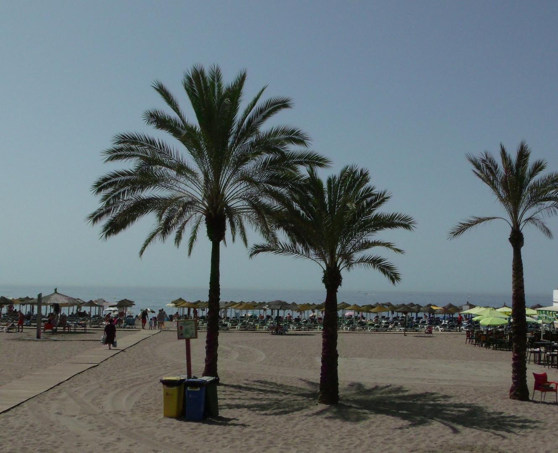 Palmen in Marbella