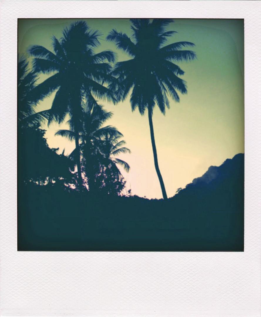 Palmen in Polaroid