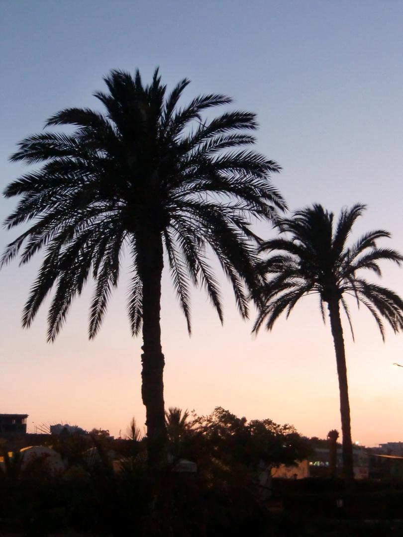 Palmen in Tunesien