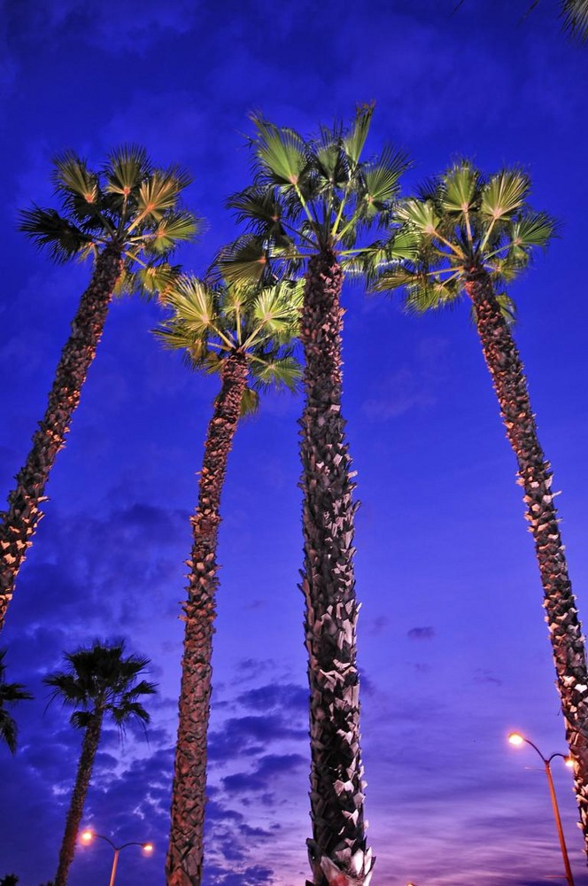 Palmen mal ohne Sonne