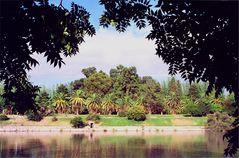 Palmen ,Parque San Martin Mendoza Argentina