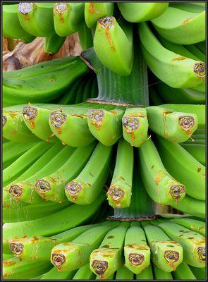 Palmen und Bananen...