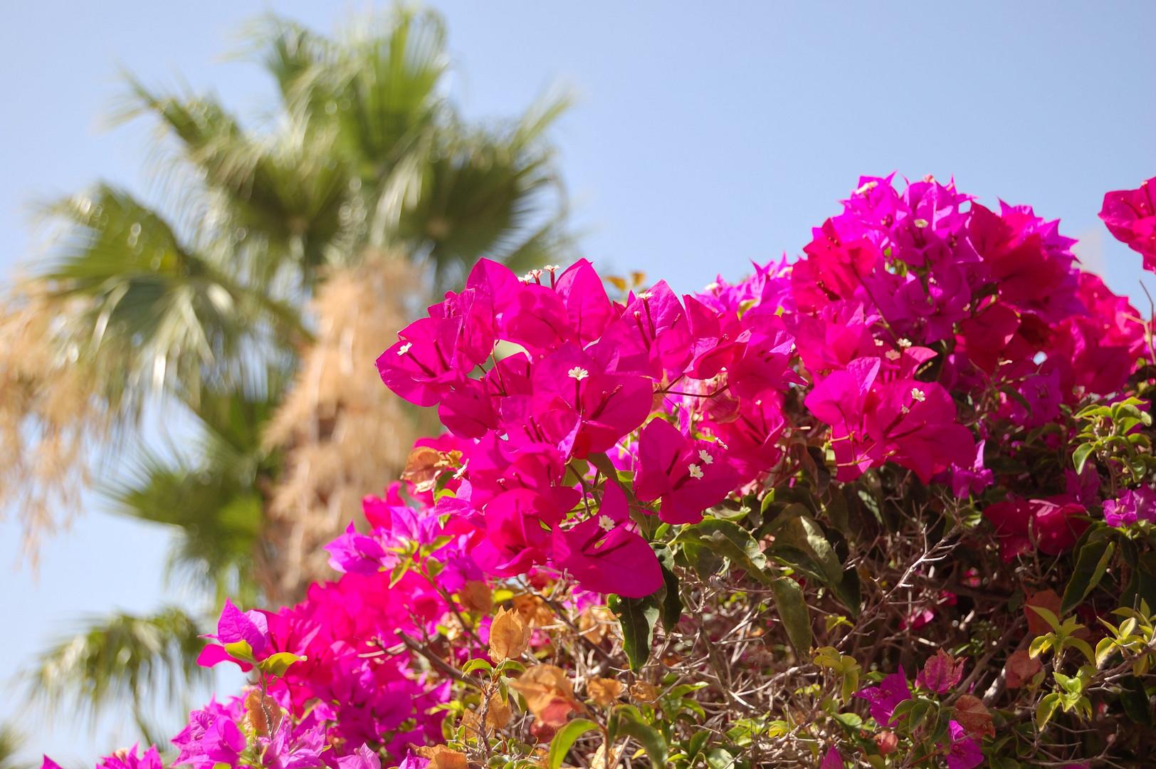 Palmen und Blüten