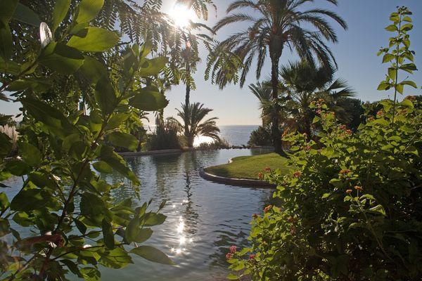Palmen und Meer