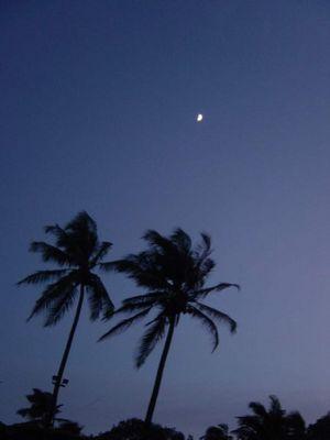 palmen und mond