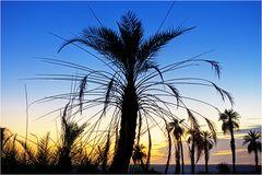 Palmen von Waw el Kebir