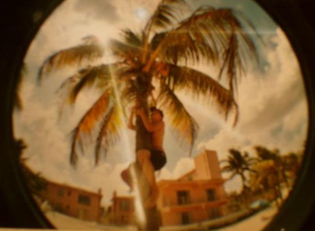 Palmenbesteiger!