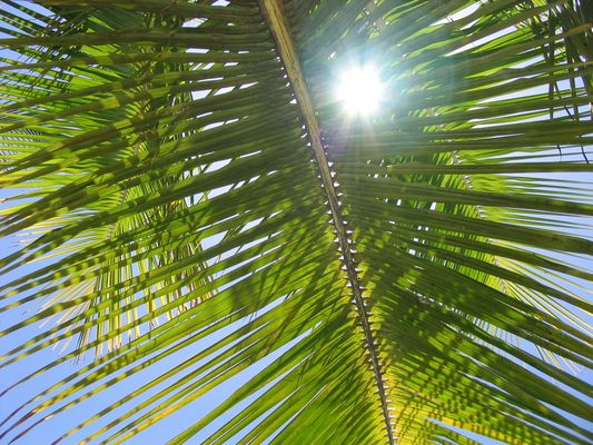 Palmenblätter vor Sonne