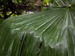 palmenblatt im fluss