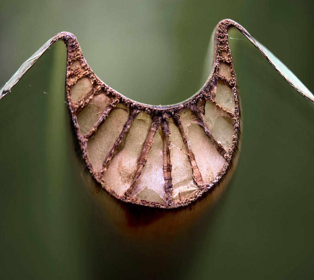 palmenblattschnitt