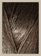 Palmengarten #3