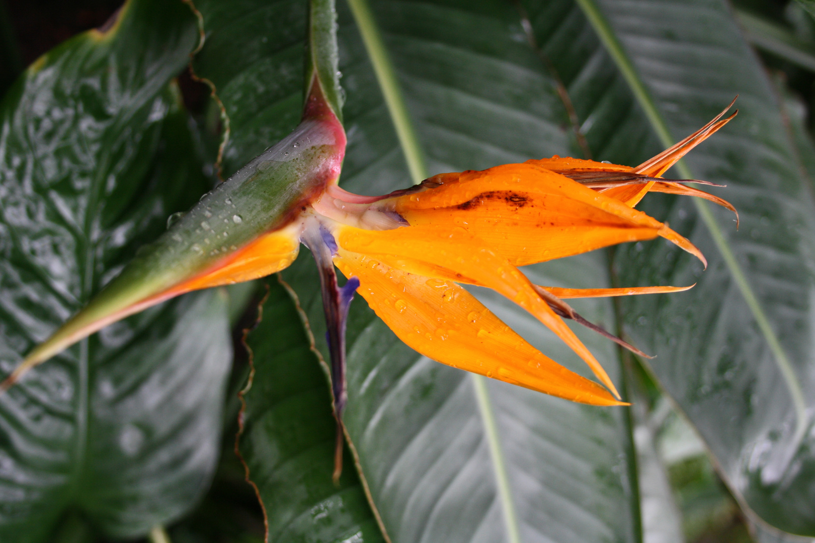 Palmengarten...