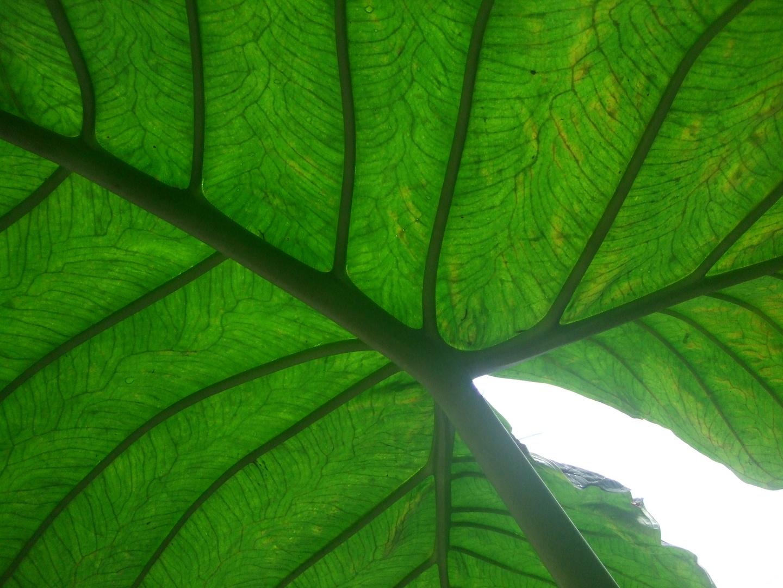 Palmengarten VII