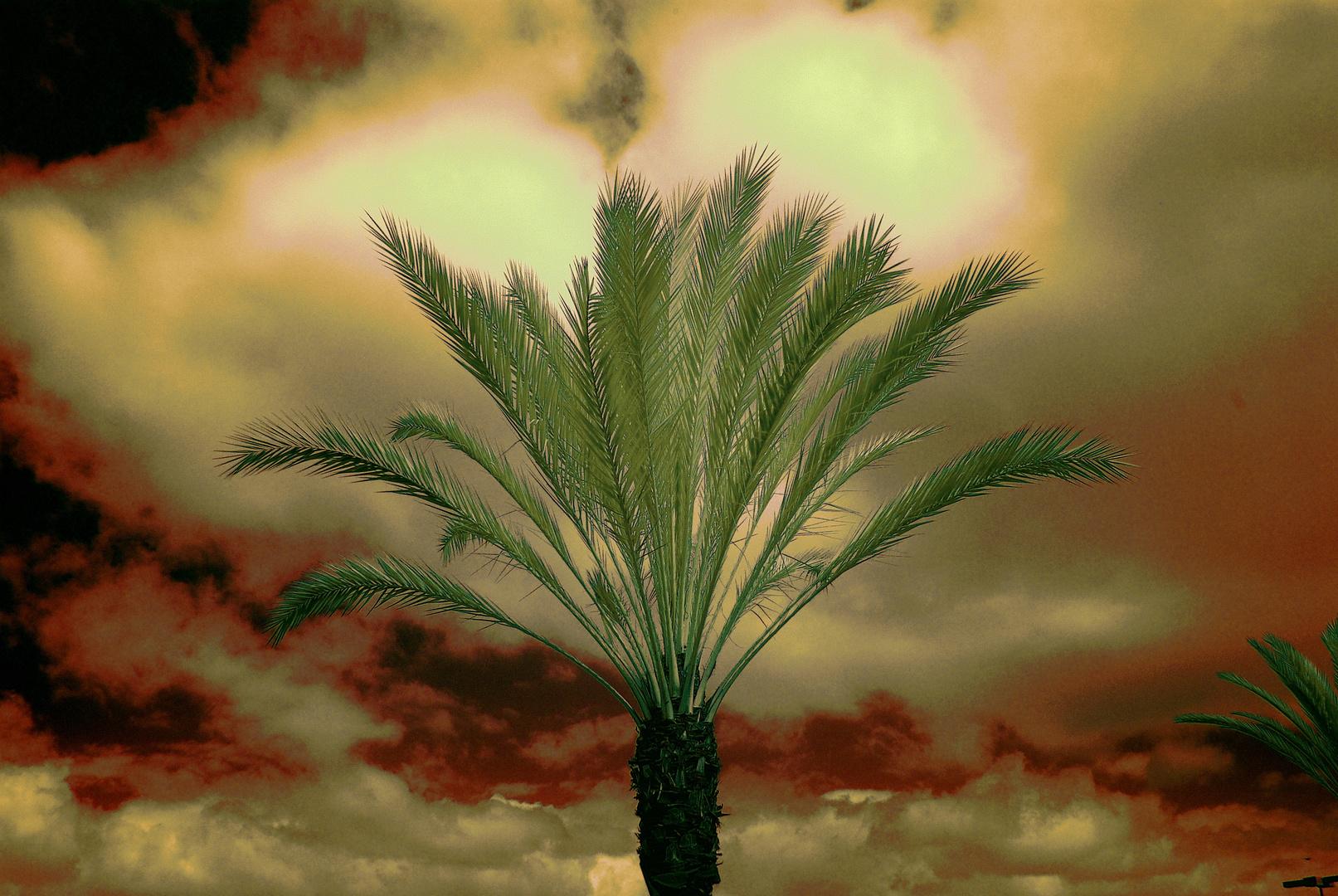 Palmengewächse