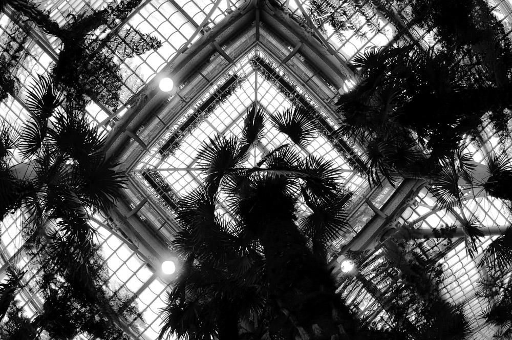 Palmenhaus 1