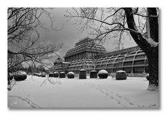 Palmenhaus im Schnee