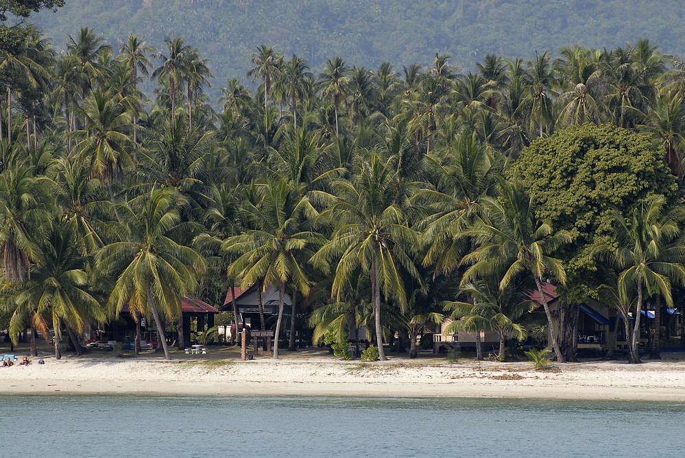 Palmenmeer auf Koh Samui