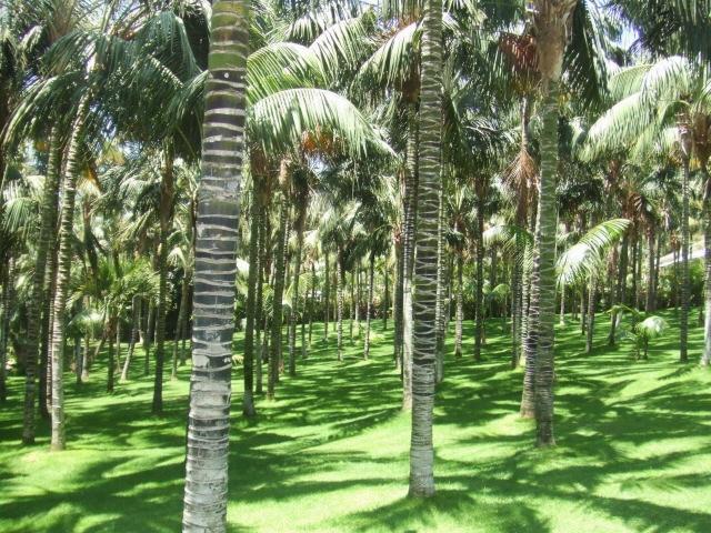 Palmenmeer