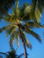 Palmenrauschen