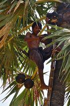 palmensaftgewinnung, bagan, burma 2011