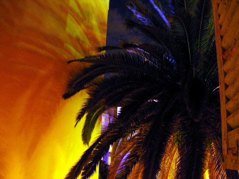 palmenschatten