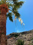 Palmenschmuck