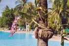 Palmenschmuck am Pool