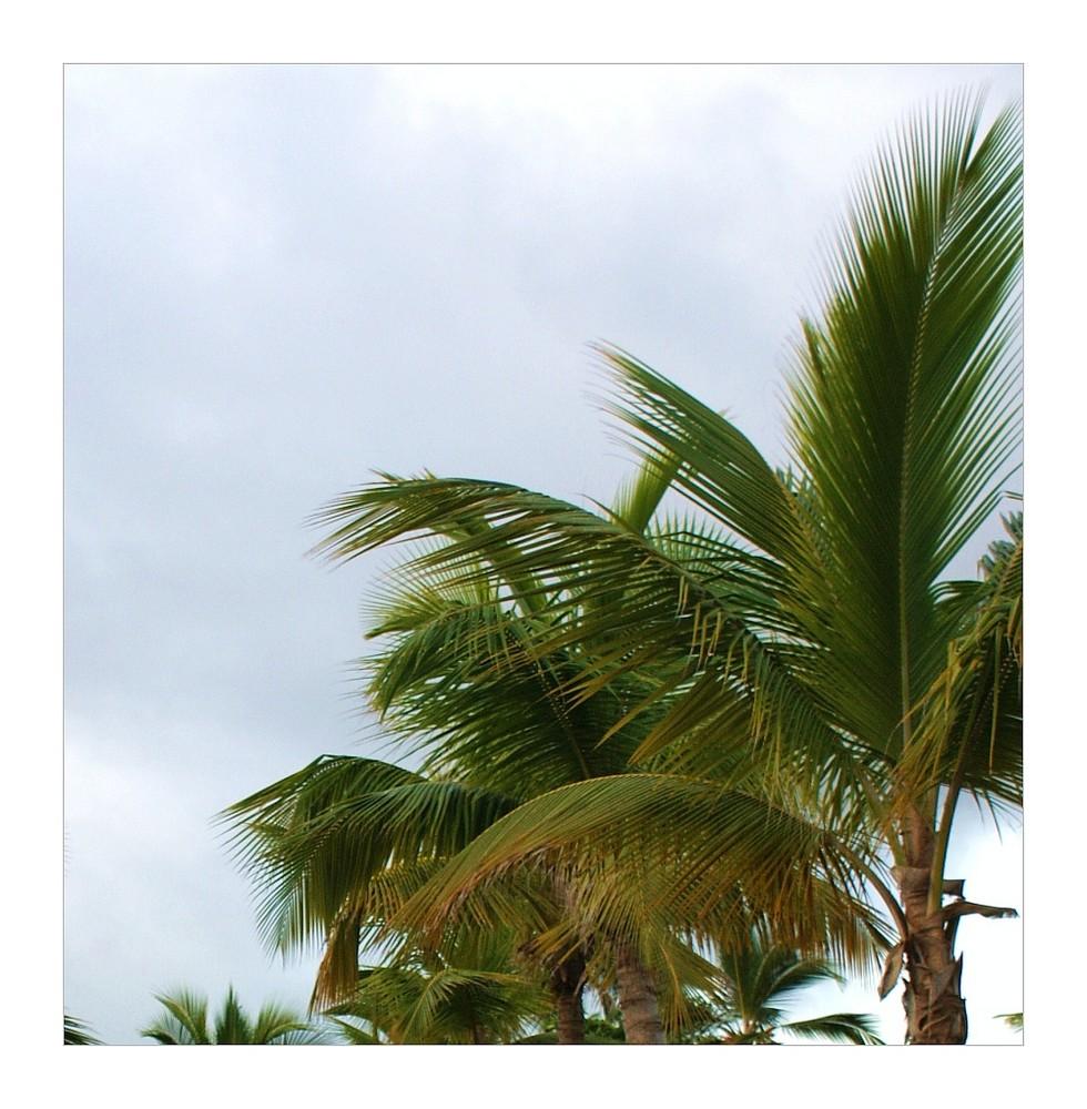 Palmensonntag ;-))