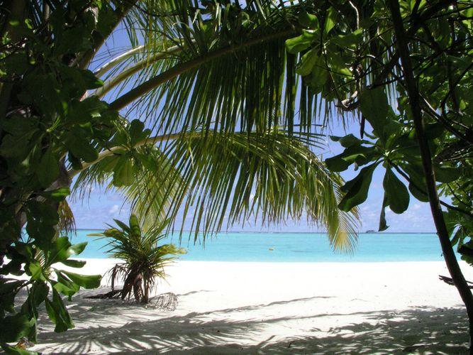 Palmenvorhang