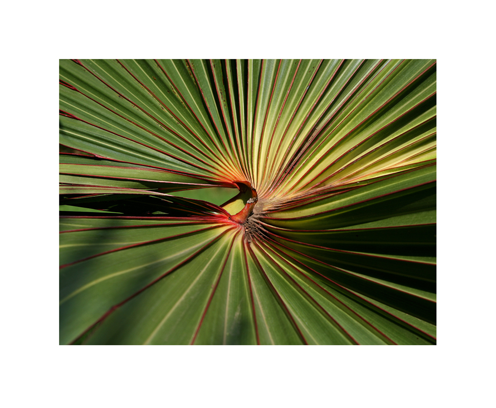 Palmenwirbel