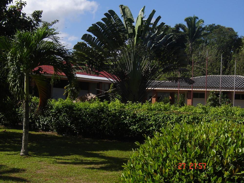 Palmera en Tela, Honduras