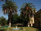 palmeras palmer en el parque
