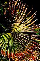 Palmes qui font la roue