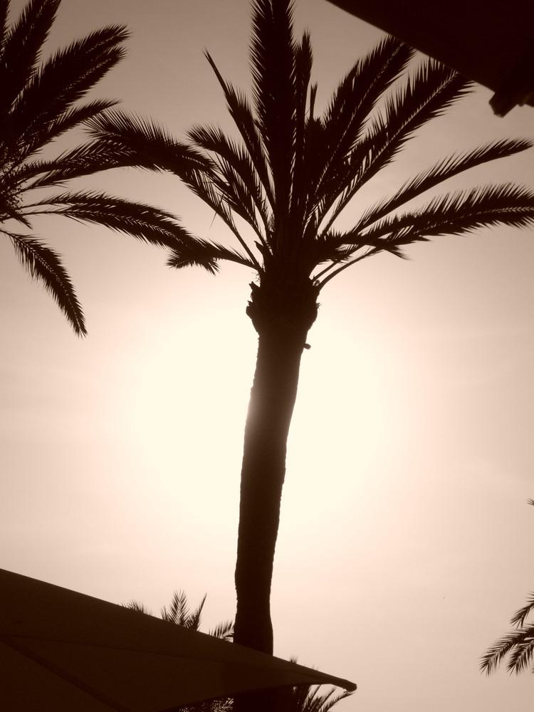 Palmier au soleil