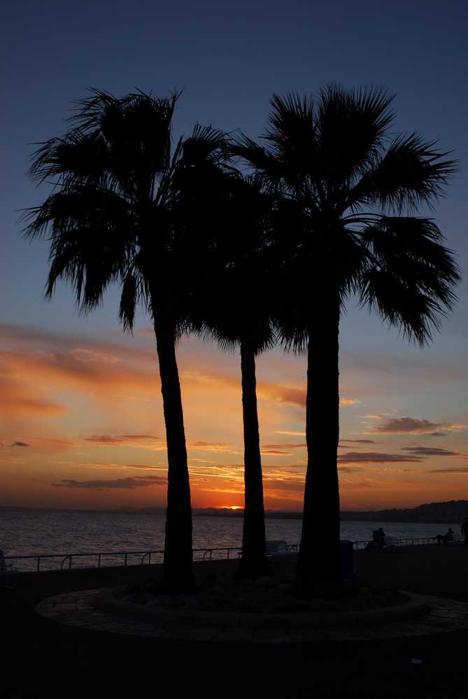 Palmier et couché de soleil