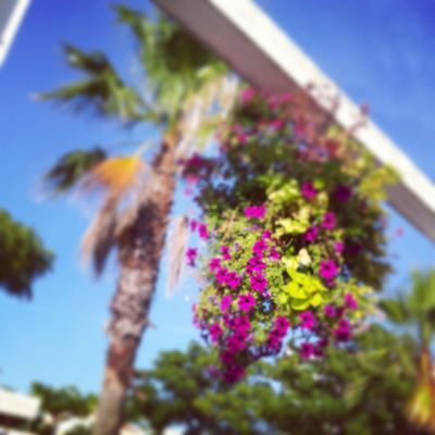 Palmier et Fleurs