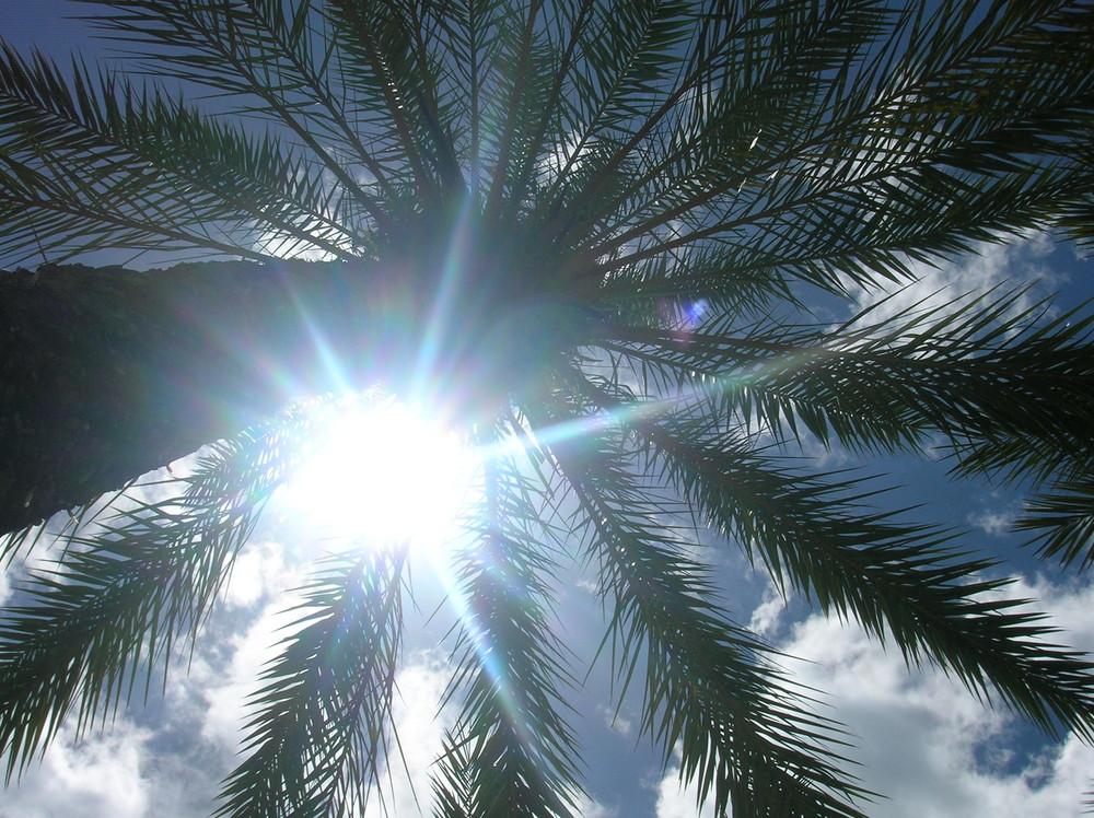 Palmier et soleil