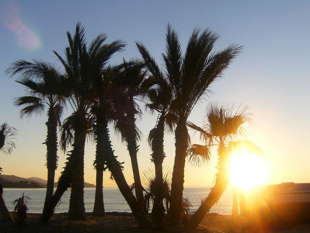 palmiers dans le soleil