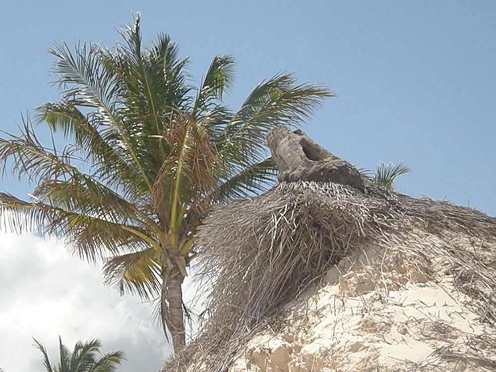 palmiers en bord de plage punta cana