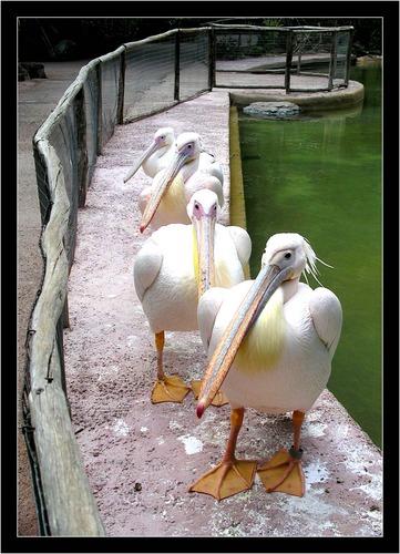 Palmitos Park - Gran Canaria im Jänner 2004