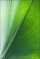 Palmlinien