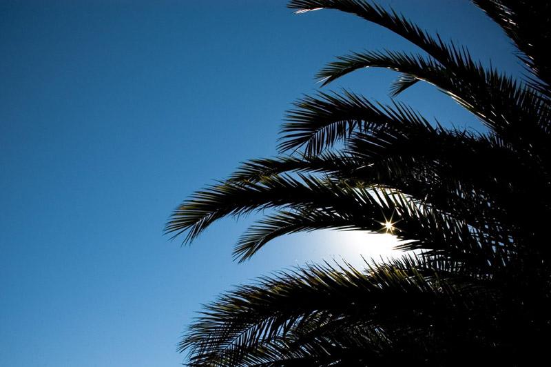 palmö